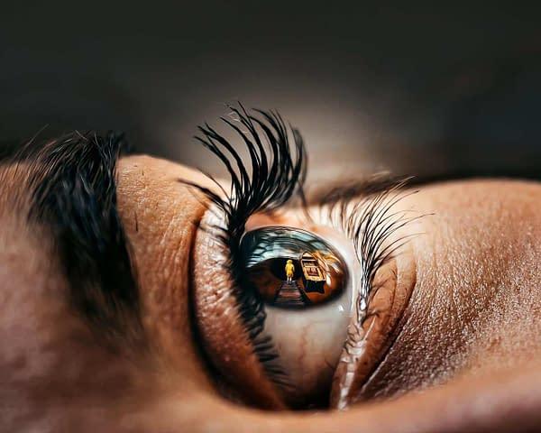 eyelids and eyelashes